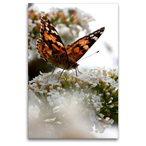 Premium Textil-Leinwand 80 x 120 cm Hoch-Format Schmetterling | Wandbild, HD-Bild auf Keilrahmen, Fertigbild auf hochwertigem Vlies, Leinwanddruck von Christine Bässler