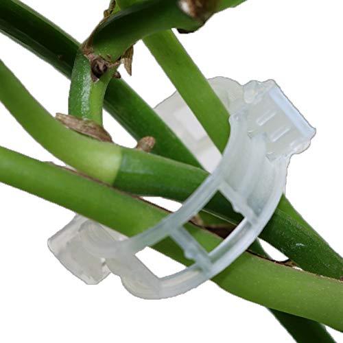 200Pcs Clips de Greffage, Spécial de Greffe Clips Support Greffage Clip Aubergine Grafting Clamp pour Légumes Tomates Plantes