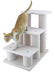 tripawd dog and cat steps and ramp training