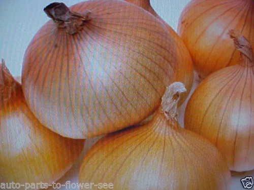 Légumes grandes douceâtre graines d'oignon jaune espagnol