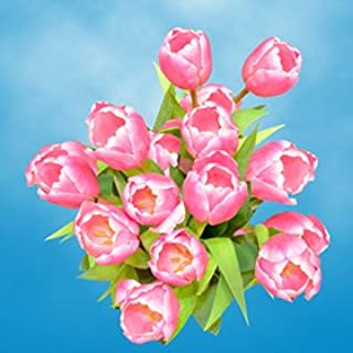 GlobalRose 60 White and Pink Tulip Flowers - Fresh Flowers Wholesale Express Delivery