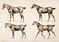 Frederic Remington ジクレープリント キャンバス 印刷 複製画 絵画 ポスター (馬)
