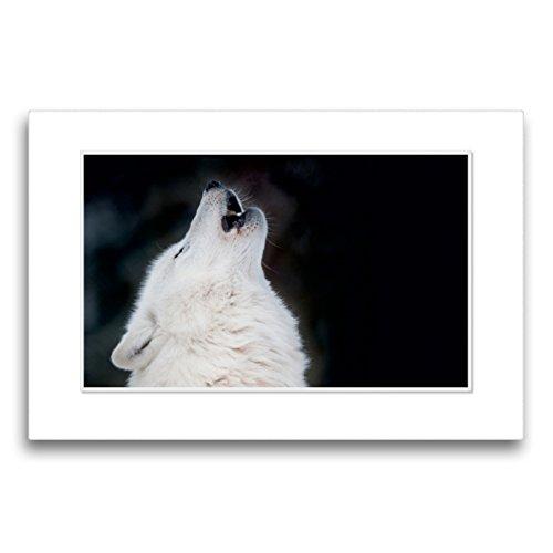 CALVENDO Premium Textil-Leinwand 75 x 50 cm Quer-Format Emotionale Momente: Polarwölfe. / CH-Version, Leinwanddruck von Ingo Gerlach