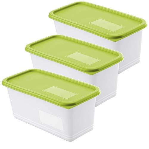 Rotho Domino 3er-Set Gefrierdosen 1.5l mit Deckel, Kunststoff (PP) BPA-frei, grün/transparent, 3 x 1,5l (23,3 x 11,8 x 10,0 cm)