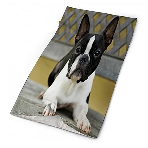 Face Cover Mask Neck Scarf Best Dogs for Seniors Boston Terrier for Running Hunting Fishing Hiking Motorcycle Biking Skiing Snowboarding Snowmobile Riding Mountain Neck mask zj