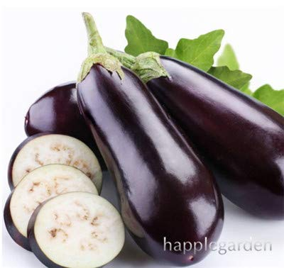 Bloom Green Co. 100 pcs chinois Aubergine Légumes bio Bonsai rond noir Aubergine Plantes Semer 4 Seasons Cour centrale Balcon: 12 Rillettes