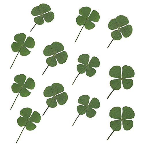 Aibeads 12pcs Natural Pressed Dried Flowers Shamrock Four-Leaf Dried Leaves for DIY Resin Jewelry Making Art Craft Decorations