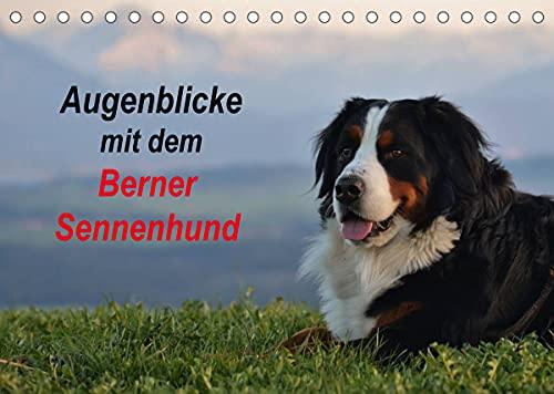 Augenblicke mit dem Berner Sennenhund (Tischkalender 2022 DIN A5 quer)