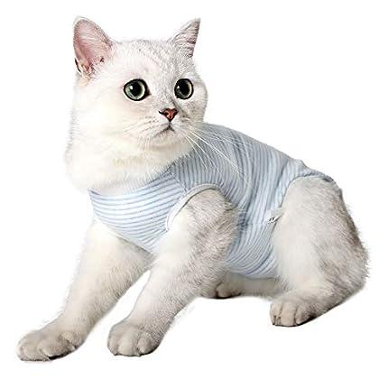 Dotoner Traje de recuperación Profesional para Gatos, Gata Camiseta de recuperación quirúrgica para heridas Abdominales Vendas Cono Cuello en Forma Alternativo(Azul,m)