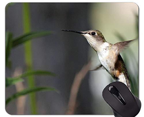 Yanteng Rectángulo Personalizado Antideslizante de Goma Mousepad, colibrí pájaro Volando Juegos Alfombrillas de ratón