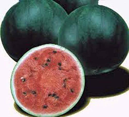 PLAT FIRM GRAINES DE GERMINATION: GRAINES DE pastèque, bébé de sucre, hérisson, biologique, 500 graines, sans OGM, melons d'eau
