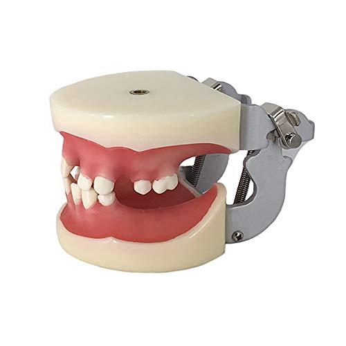 BZZBZZ Modello di insegnamento dei Denti - Modello di Pratica di impianto Dentale con Gengive morbide - per Trapano di Esercitazione in Ospedale