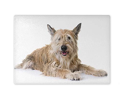 Snijplank/glazen snijplank 20x28x0,4 cm - Motief: Hond Berger de Picardie Portret | 01