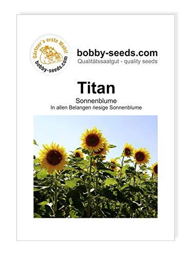 Titan Riesensonnenblumensamen von Bobby-Seeds, Portion