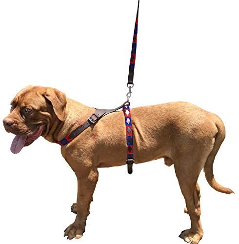 Carlos Diaz Hundegeschirr und Leine, echtes Leder, gewachst, bestickt, leicht zu kontrollieren