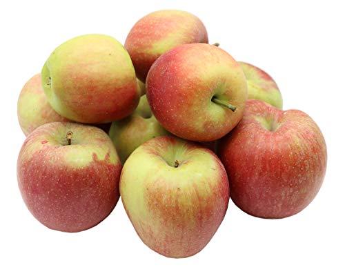 Bleichhof Äpfel Braeburn - süß-herbe knackige Sorte aus der Pfalz (5kg) Neue Ernte 2020