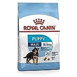 Royal Canin - Maxi Junior - Nourriture pour chien - Grandes races - 1 x 10 kg