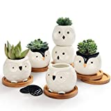 Set of 6 White Ceramic Planters Porcelain Mini Flower Pot for Small Indoor Plant Succulent Cactus with Drainage and Wooden Saucer Tray (White Owls)