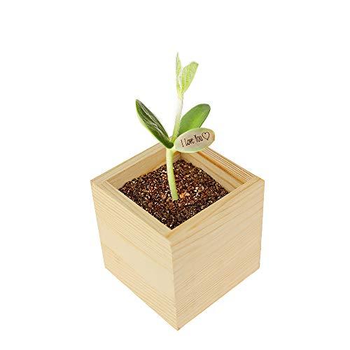 Casa Vivente Zauberbohne mit Holzbox, Pflanze mit Botschaft I love you, Inklusive Anzuchtset, Liebesgeschenk für Paare
