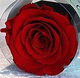 Rosa eterna Rossa