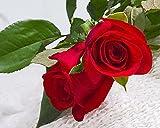 Yumhouse Semillas de Flores para Jardin,Rose Seed Colorful Rose Flower Seeds Four seasons-150 Capsules_Yellow,Semillas de Flores Exterior trepadoras