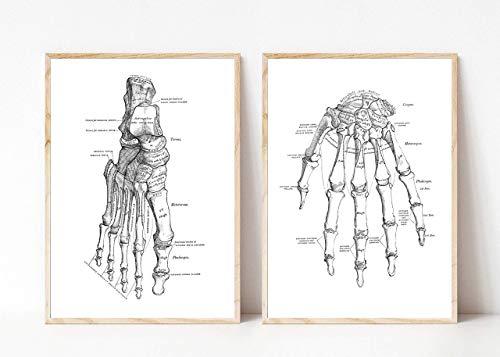 Din A4 Kunstdruck ungerahmt 2-teilig Anatomie Hand Fuß Skelett Medizin Arzt Druck Poster Bild