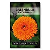 Sow Right Seeds - Ball's Orange Calendula Seeds for Planting, Beautiful to Plant in Your Flower Garden; Non-GMO Heirloom Seed; Wonderful Gardening Gift (1 Packet)