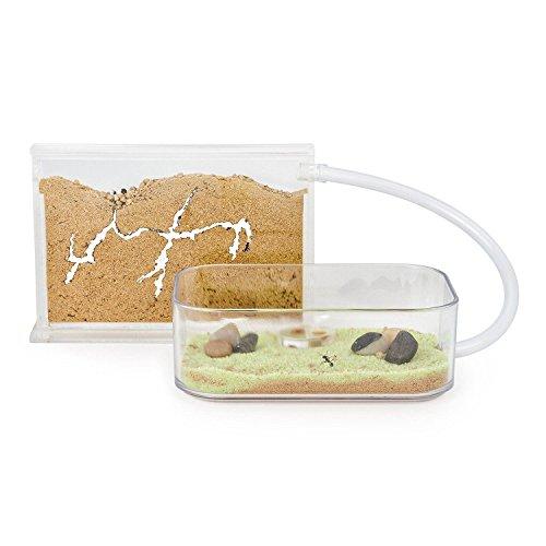 AntHouse - Natürliche Ameisenfarm aus Sand - Basic Set (Sandwich + Futterbox) (Gratis Ameisen)