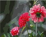 Pintura por Números DIY Pintar por Numeros para Adultos Niños (Flor roja) Pintura al óleo Kit con Pinceles y Pinturas, Lienzo Regalo de Pintura 40 x 50 cm Sin Marco