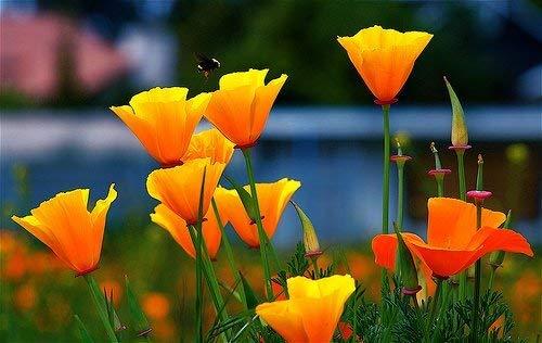 RETS Seeds: Pinkdose: -Mixed Seeds s Seeds Outdoor (14 Packets) Garten Samen von