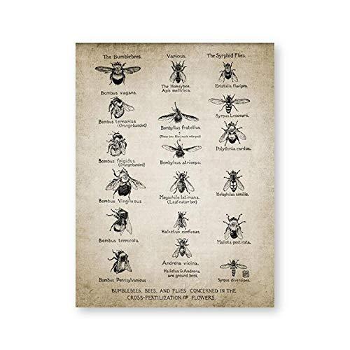 CNHNWJ Vintage Bees Poster Bumblebees vliegen afdrukken Insect illustratie entomologie muurkunst canvas schilderij onderwijs wetenschap wanddecoratie (40x60cmx1 / geen lijst)