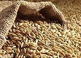 Potseed Las Semillas de germinación de Semillas de Cebada: