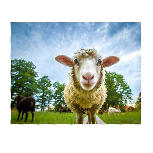 YISUMEI Decke 150x200 cm Kuscheldecken Sanft Flanell Weich Fleecedecke Nettes Schaf Muster