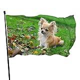 Bandera de jardín con diseño de perro de césped de Chihuahua, para interior y exterior, 3 x 5 pies, resistentes a la decoloración, banderas de playa duraderas con encabezado, fácil de usar