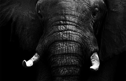 Fototapete selbstklebend | Elefant - schwarz-weiß | in 420x270 cm | Bild-tapete Moderne Wand-deko Dekoration Wohnung Wohnzimmer Wandtapete | 501263