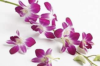 Best discount orchid plants Reviews