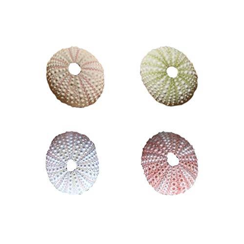 Lioobo - Juego de 4 contenedores de conchas náuticas para decoración de casa, fiestas, bodas, decoración de aire y plantas, color aleatorio