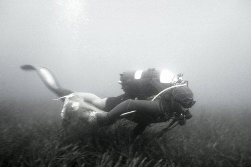 クロアチア産アドリア海の天然海綿クイーン・オブ・シースポンジフェイシャルケア用