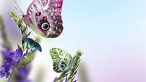 LIWeißY DIY maßen Nach Zahlen Kits,  em e, maßen Nach Zahlen Für Erwachsene Leinwand Home Decor, Sch  Schmetterlinge Auf Blaumen, Mit Rahmen, 50x6cm