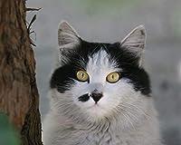 番号による絵画Diy大きなサイズの猫の銃口が斑点を付けられたキャンバス部屋の装飾アート画像子供ギフト番号によるペイント大人のためのキットカラー原稿 カスタマイズ可能 50x65cmフレームなし