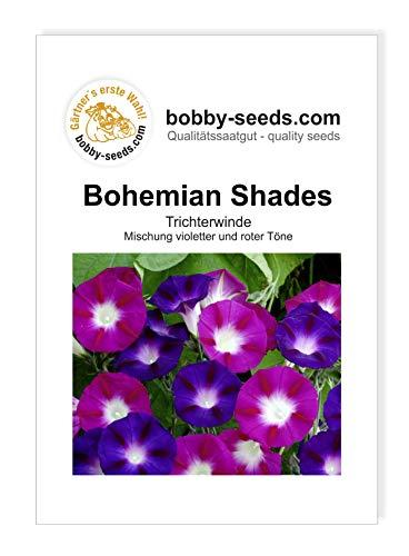 Bobby-Seeds Kletterpflanzen Samen Prunkwinde Bohemian Shades Portion
