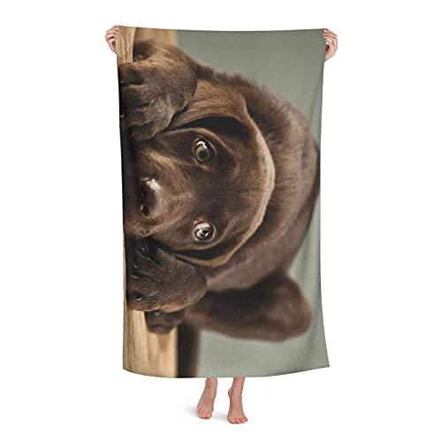 Venuy Beautiful Adorable Chocolate Lab Puppy Sweet Pretty Cute Labrador Toalla De Playa para Adultos, Tamaño 32 X 52 Pulgadas, Absorbente, Portátil, Ligero, Manta, Toallas, Toallas De Baño Suaves