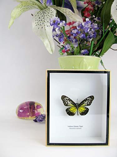 asiahouse24 Yellow Glassy Tiger - Marco de fotos de madera enmarcado con diseño de mariposa en 3D, color amarillo