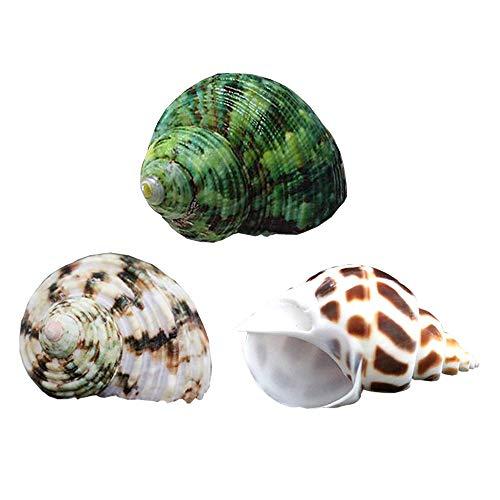 YL Hermit Crab Shells 3PCS Natural Large Hermit Crab Shells 2 Inch ~ 2-1/2 Inch