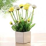 Ensemble de fleurs artificielles Casa perfetta avec pot de fleurs - Décoration créative pour la maison, le salon