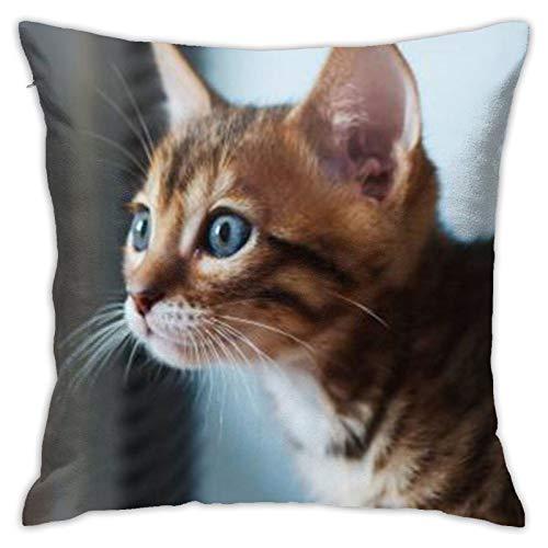 Cat (15) Funda de almohada cuadrada personalizada para sofá, dormitorio, oficina, 45,72 x 45,72 cm