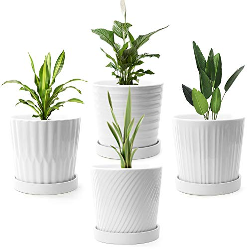 FairyLavie Plant Pot, 6'' White Ceramic Planter with Drainage Hole and Saucer for Indoor Outdoor Flower Plants, Great for Home Decor and Ideal Gift, Set of 4