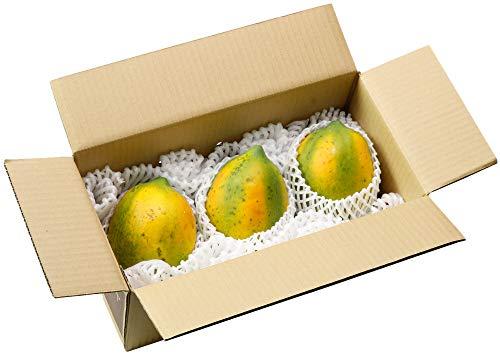 財宝 フルーツパパイヤ 2kg (3〜5玉) 沖縄県 石垣島産