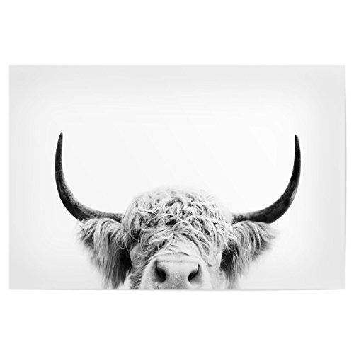 artboxONE Poster 30x20 cm Tiere Spähen Kuh BW hochwertiger Design Kunstdruck - Bild schwarz und weiß Kuh spähen Kuh