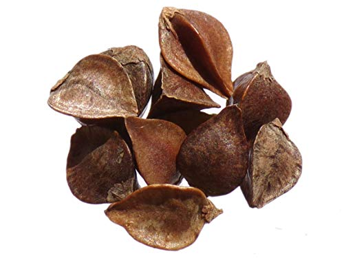 Sarrasin - 1 gramme - Fagopyrum Esculentum - Buckwheat - (Engrais Vert - Green Manure) - SEM02